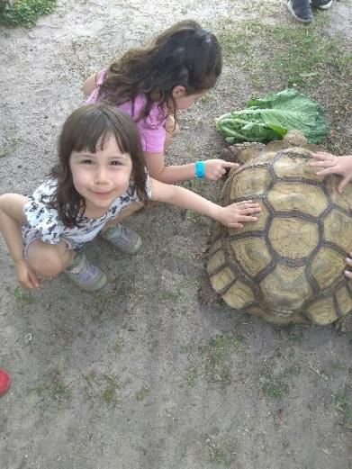 lil pets turtle